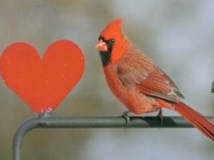 cardinal-with-a-heart_41926