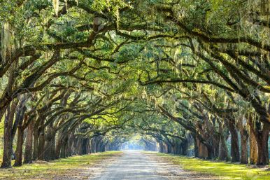35806488-savannah-georgia-usa-oak-tree-lined-road-at-historic-wormsloe-plantation-